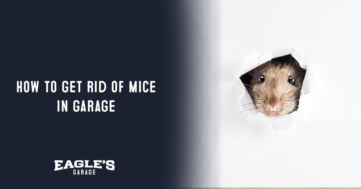 how to get rid of mice in garage