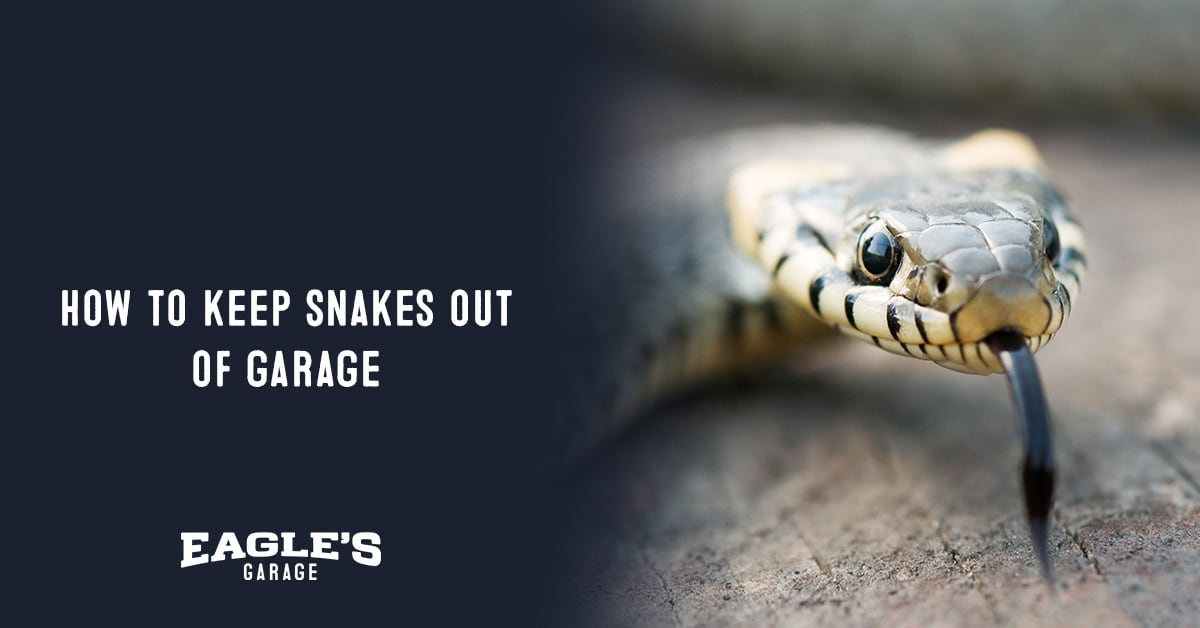how to keep snakes out of garage