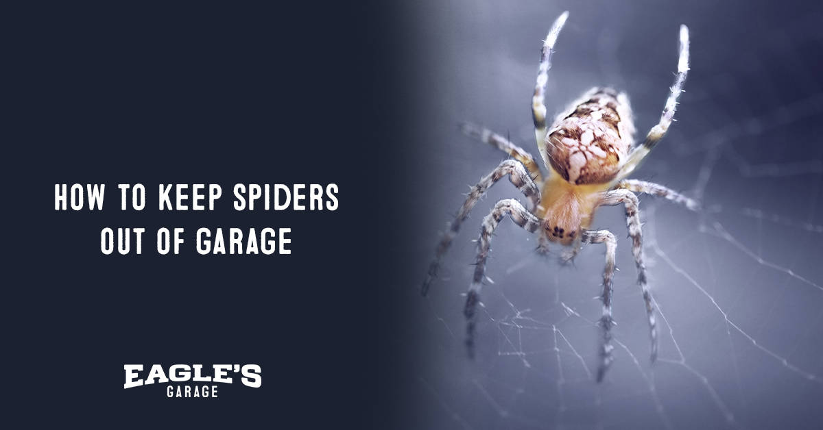 how to keep spiders out of garage